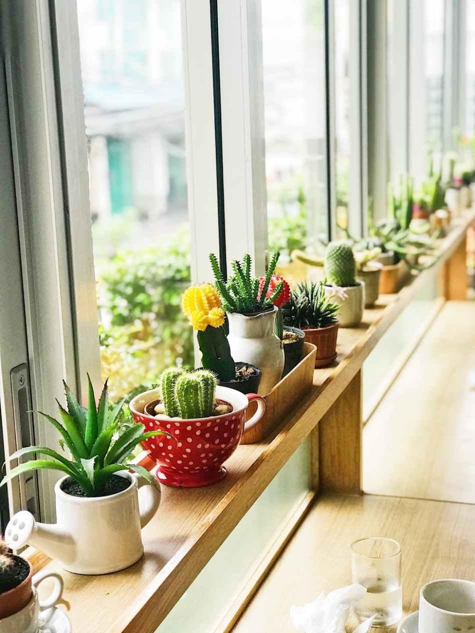 green cacti in pots near window